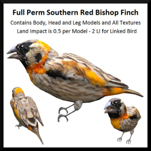 Full Perm Southern Red Bishop Finch Ad
