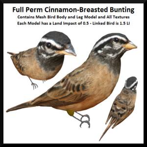 Lunar Seasonal Designs FP - Cinnamon-Breasted Bunting Ad