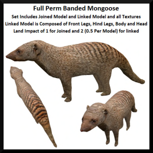 Full Perm Banded Mongoose Ad