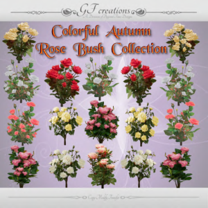 GFC-Autumen Rose Bush Collection -Ad