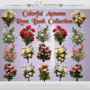 GFC-Autumen Rose Bush Collection -Ad