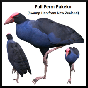 Lunar Seasonal Designs FP - Pukeko Ad