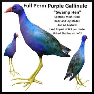 lunar-seasonal-designs-fp-purple-gallinule-swamp-hen-ad